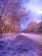 19th Sep 2020 - Jacaranda Avenue