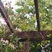 Honeysuckle...Blooms & Berries