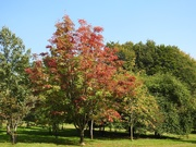 22nd Sep 2020 -  Early Autumn Colours