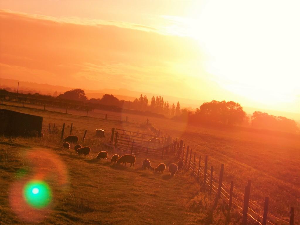 Solar Glare Grass Grazers by ajisaac