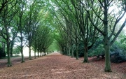 24th Sep 2020 - Anglesey Abbey