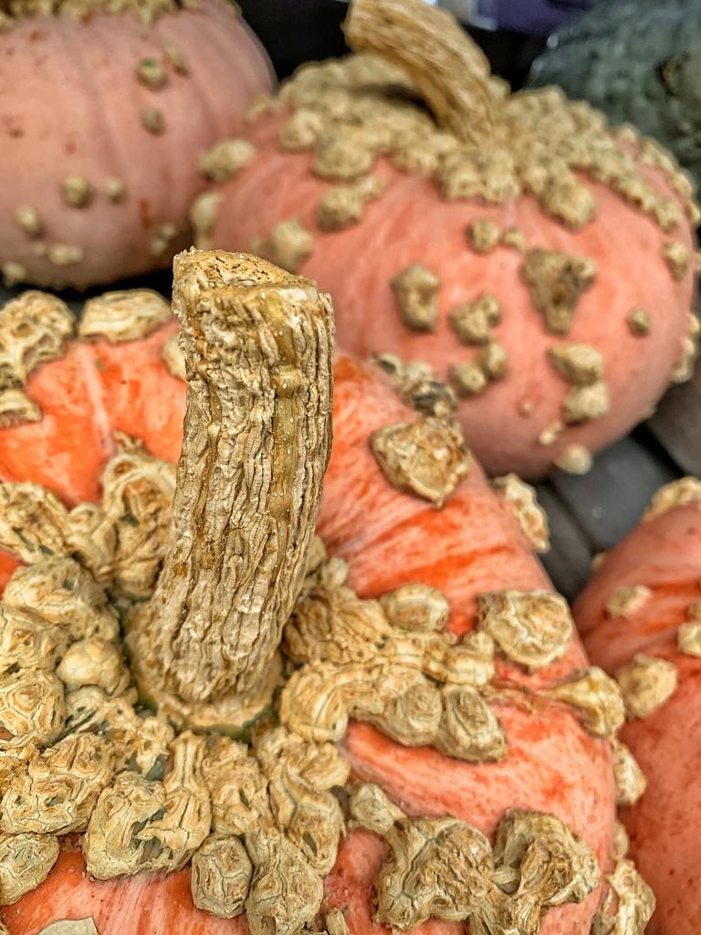 The weird pumpkins.  by cocobella