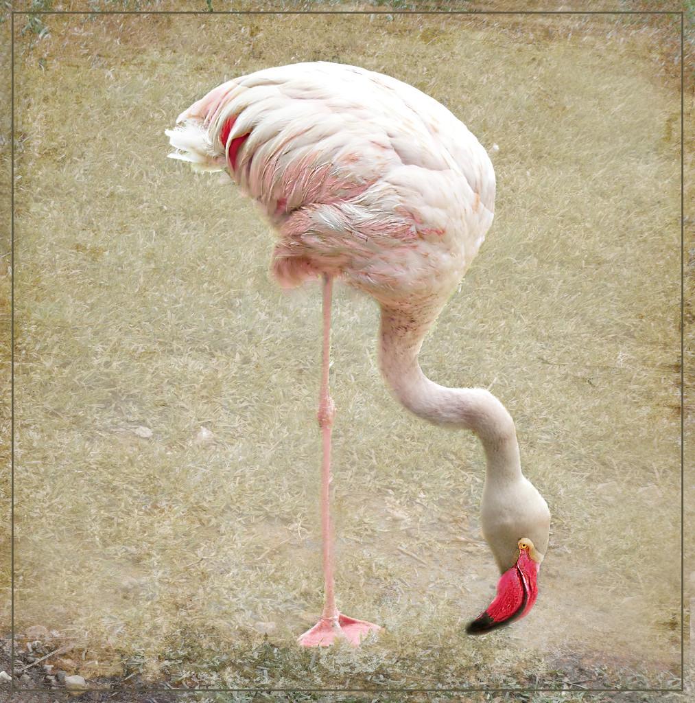 Happy Flamingo Friday by ludwigsdiana