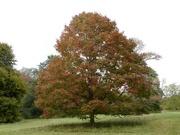 24th Sep 2020 - Favourite Tree
