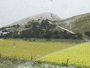25th Sep 2020 - Snow ON the elephant today!!