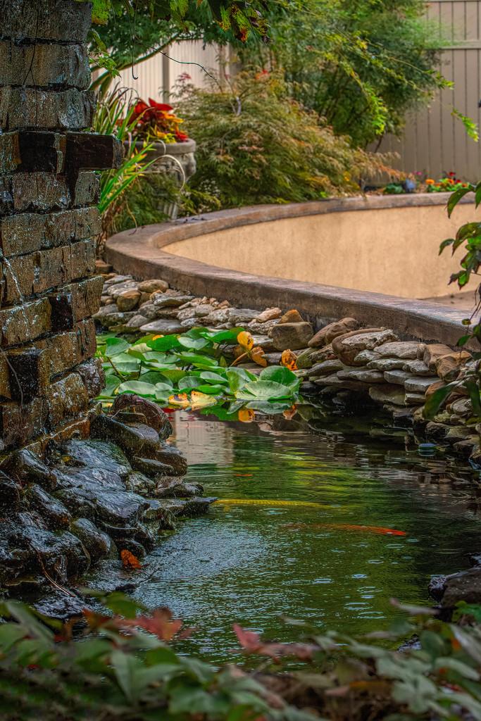 Our Koi pond  by samae