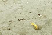 1st Sep 2020 - Yellow Crab