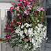 Hanging basket on Beckhampton Road  by neiljforsyth