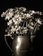 25th Sep 2020 - monochrome bouquet