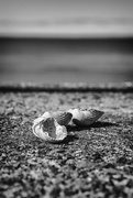 20th Sep 2020 - Unwanted shells