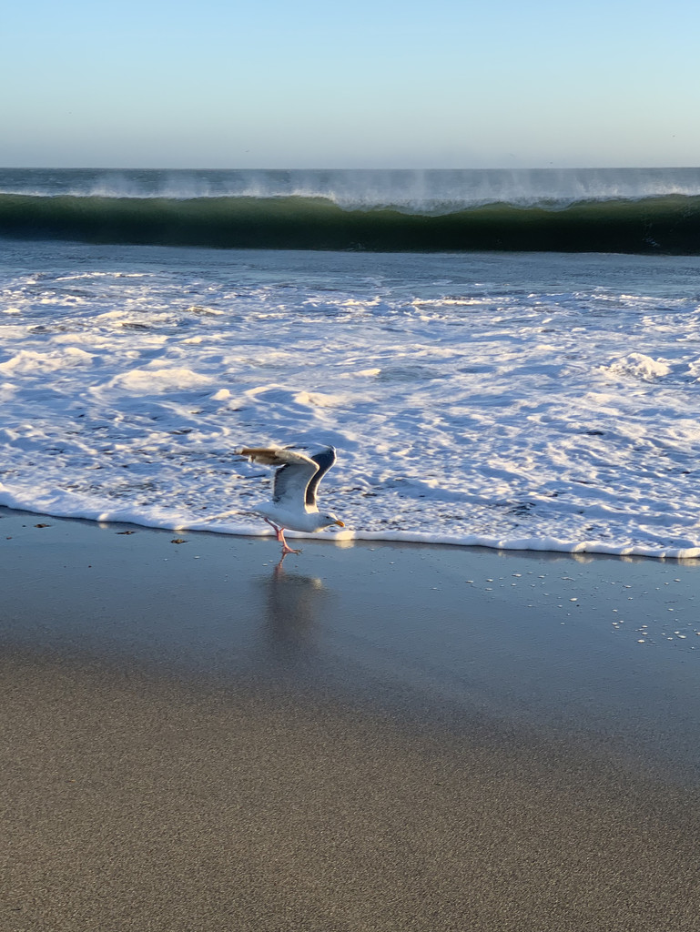 A seagull who didn't want to get its feet wet! by shookchung