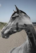 26th Sep 2020 - Horse's friends