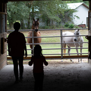 26th Sep 2020 - Going to feed the horses...