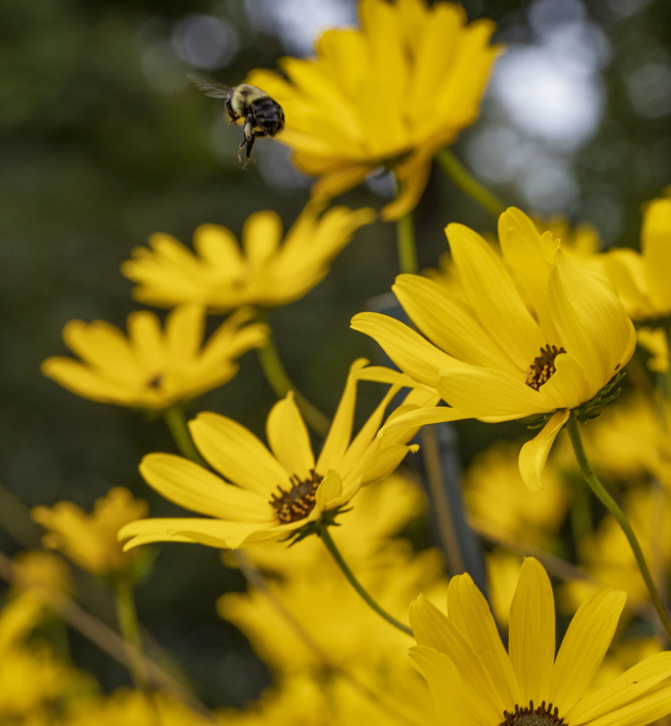 Bee Heaven by kvphoto