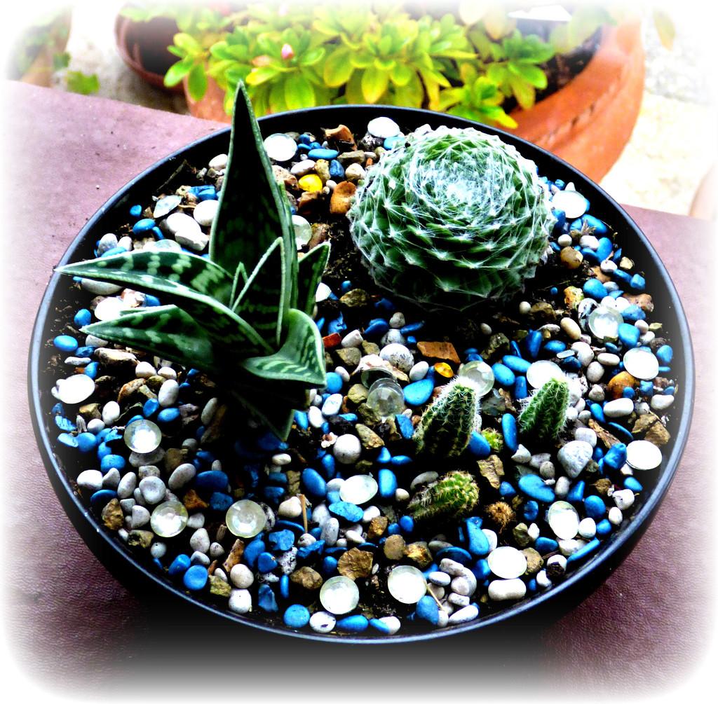 Cacti Bowl  by beryl
