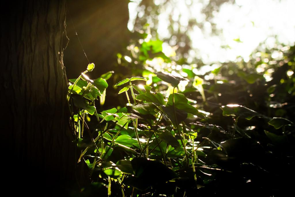 A glint of hope by teriyakih