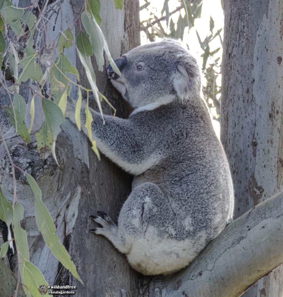 mine mine mine by koalagardens