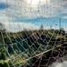 Sunny Web
