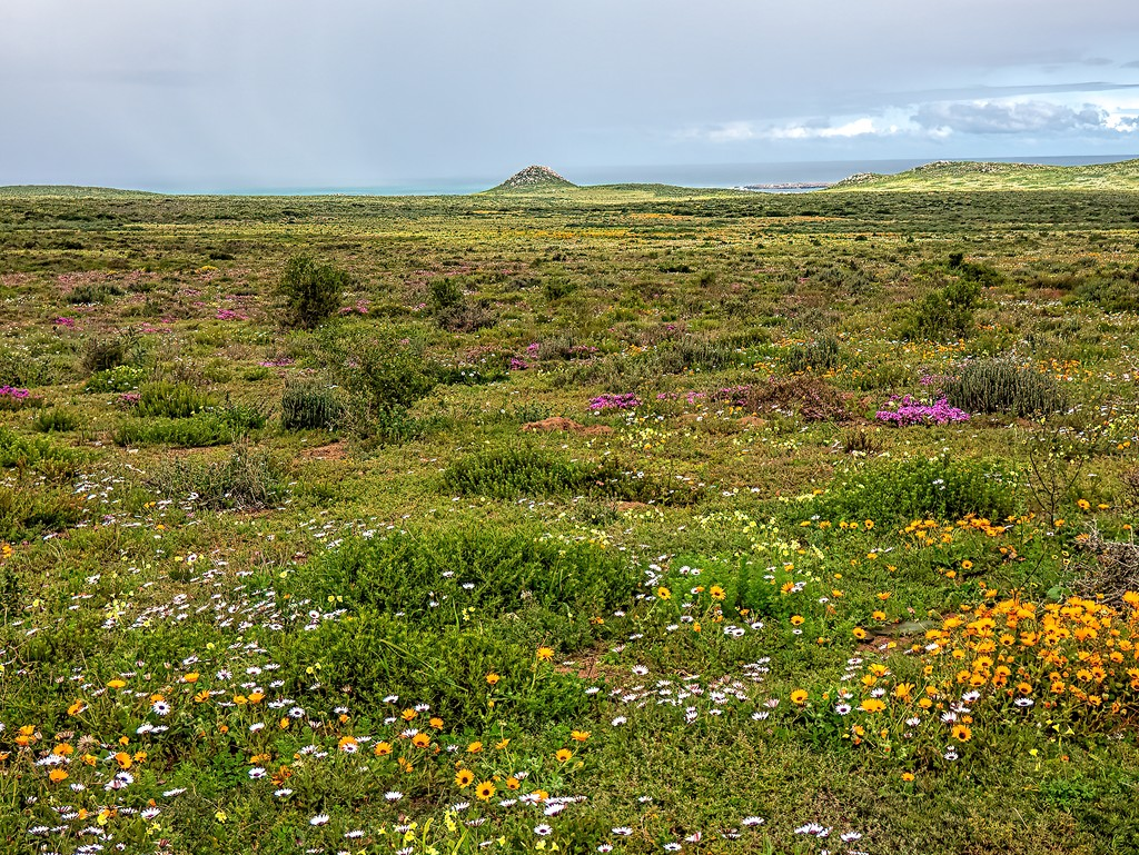 Postberg nature reserve by ludwigsdiana