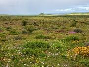 27th Sep 2020 - Postberg nature reserve