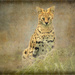 Baggins the Serval