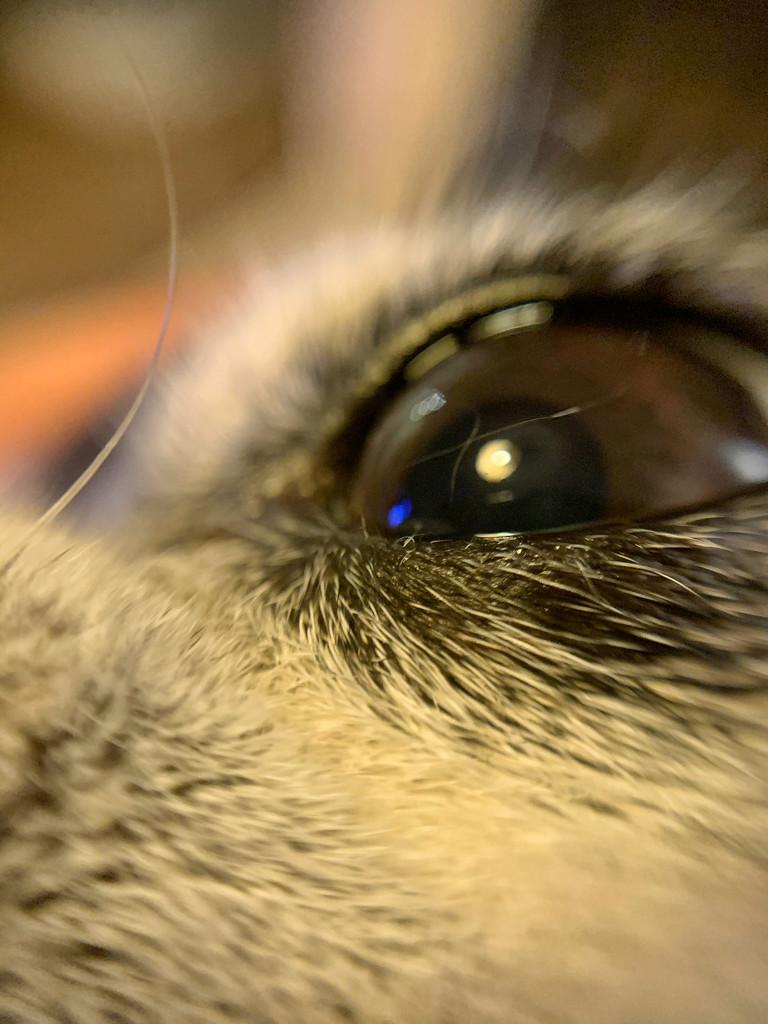 Eye.  by cocobella