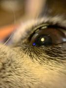 28th Sep 2020 - Eye.