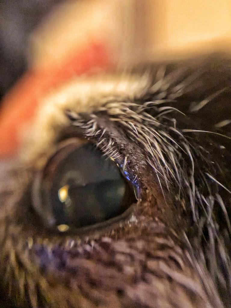 Eyebrow.  by cocobella