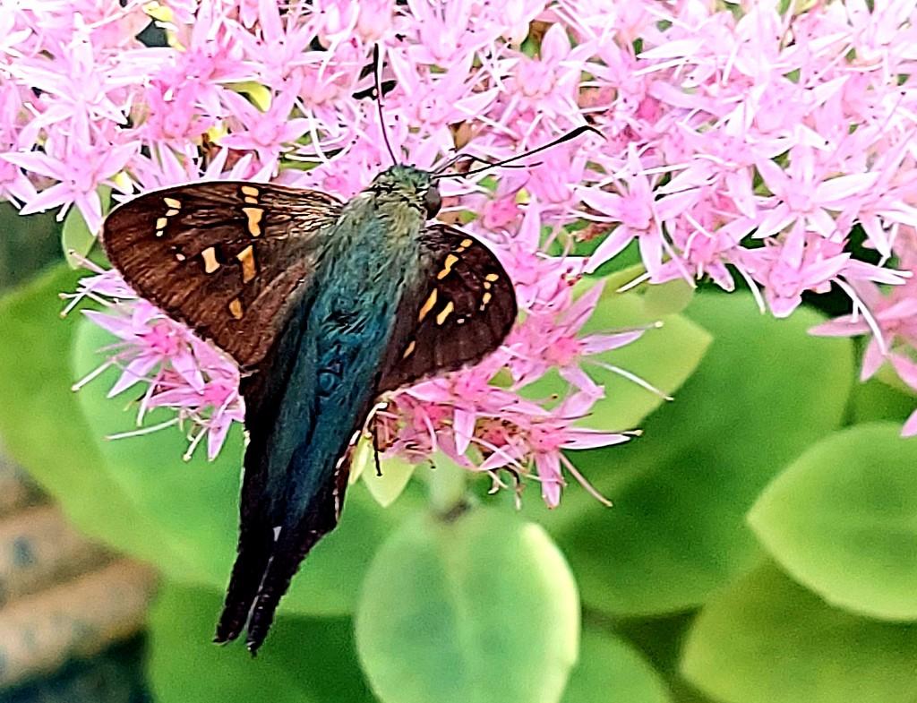 Moth by harbie