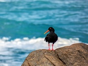 28th Sep 2020 - Oyster catcher keeping it's distance