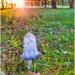 A pretty mushroom in the sunshine 😁