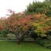 Autumn colours 3 by neiljforsyth