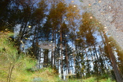 28th Sep 2020 - Reflections
