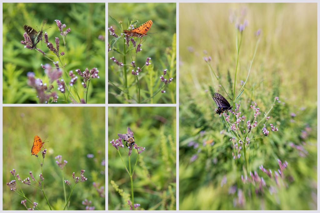 Pollinators by kvphoto