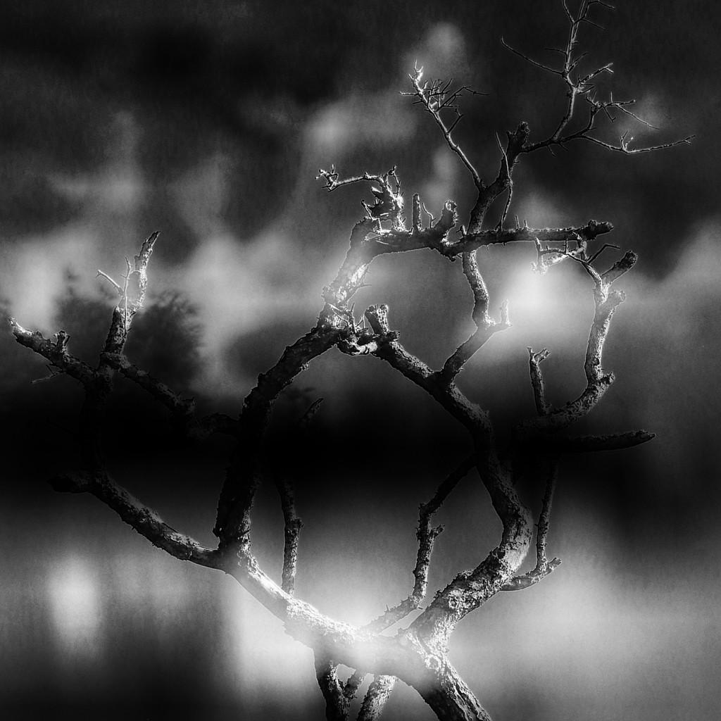 Through a foggy,moisty,wet window by joemuli