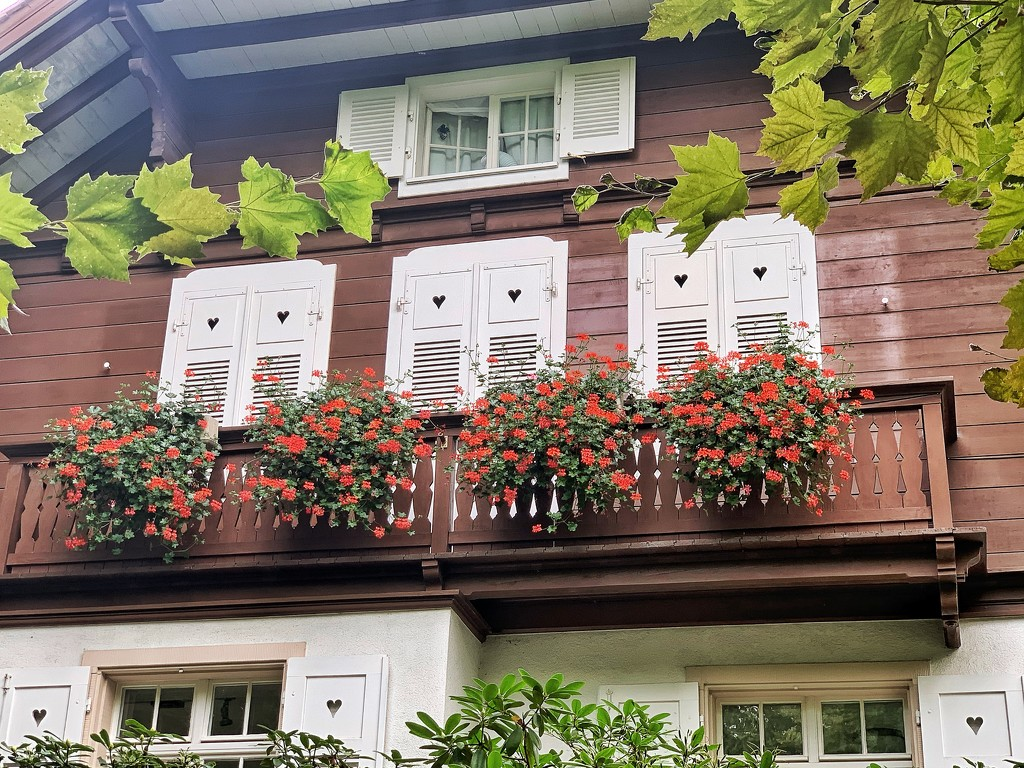 Hearts on white shutters.  by cocobella