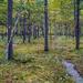 Quaking Bog Trail