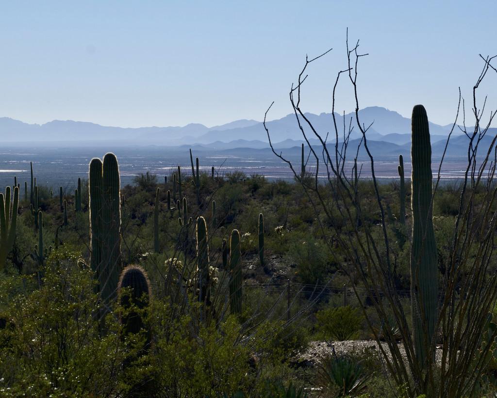 Arizona-Sonora Desert Museum by eudora