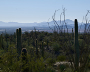 26th Sep 2020 - Arizona-Sonora Desert Museum
