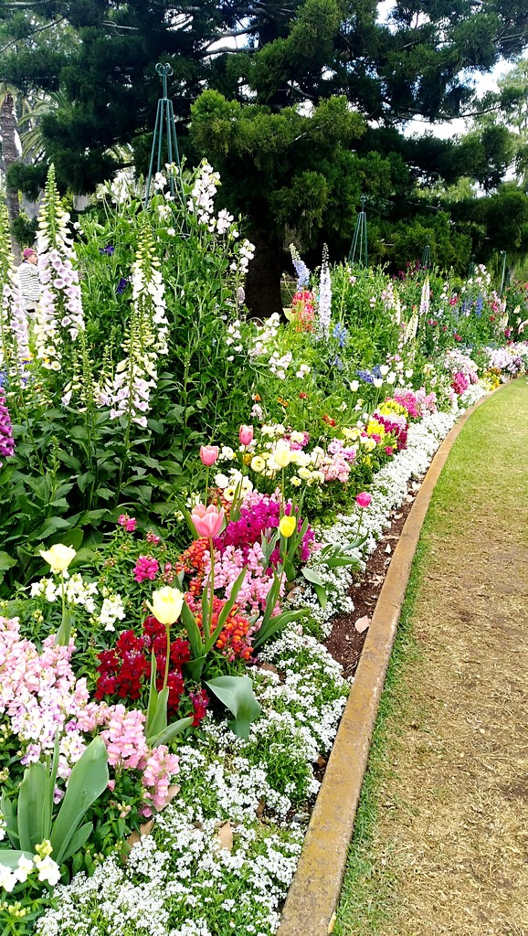 Back to Toowoomba flower Gardens by 777margo