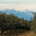 First snow on Canigou