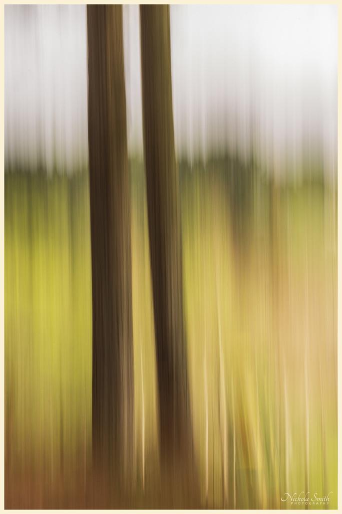 Pines by nickspicsnz