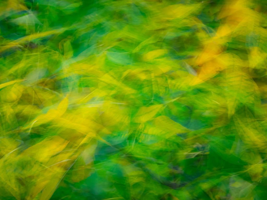 Autumn impression by haskar