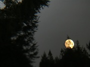 27th Sep 2020 - Orange moon