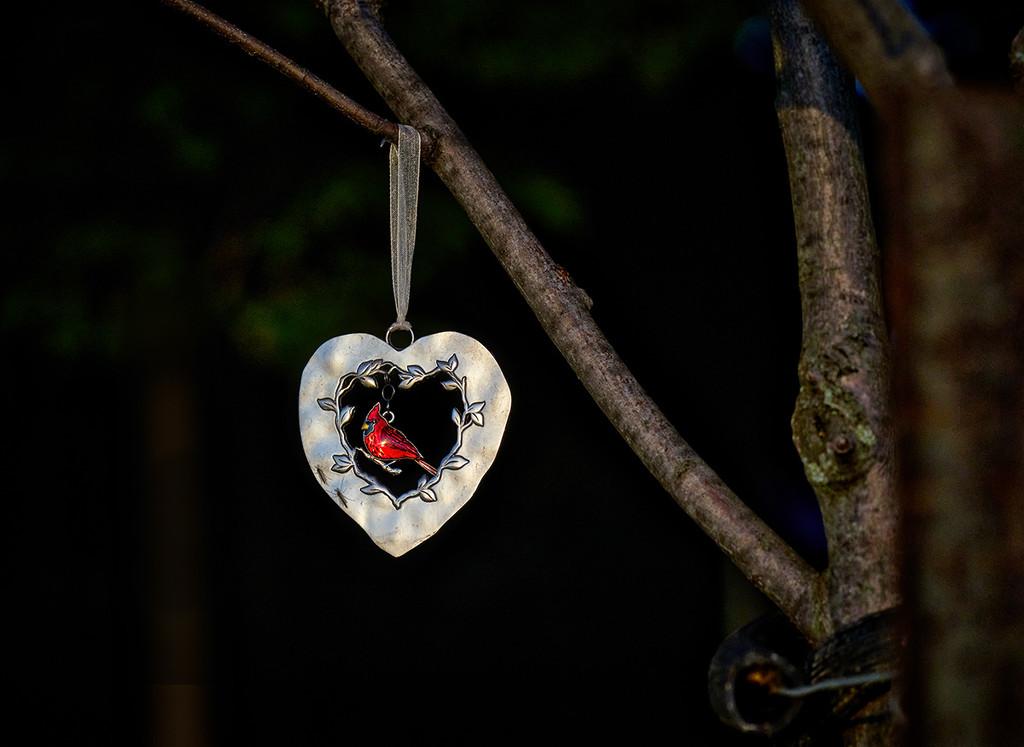Token of Love? by gardencat