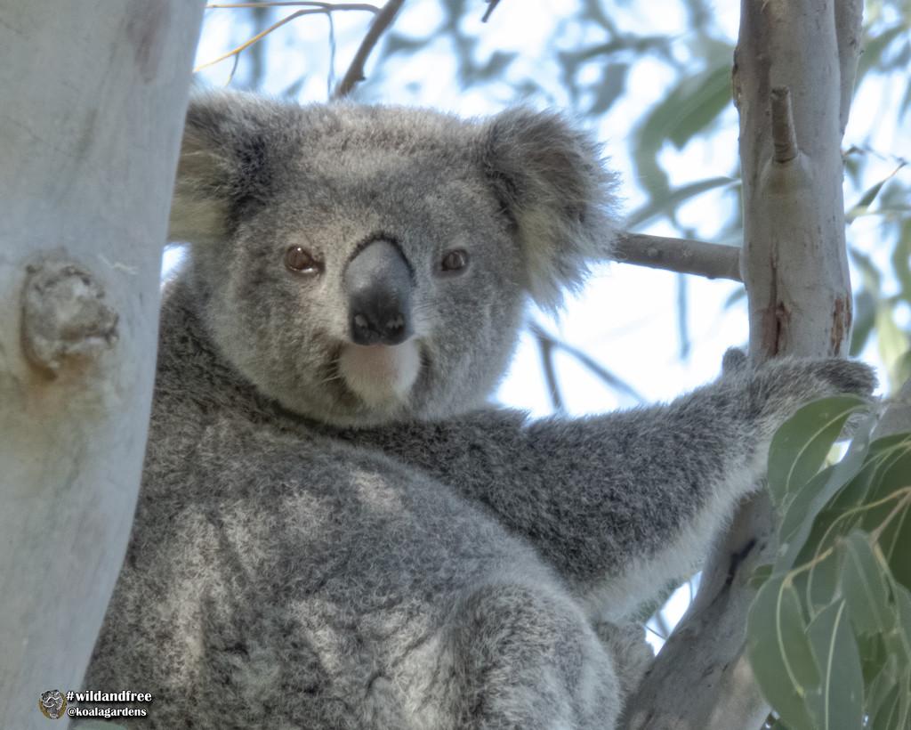 meet Millie by koalagardens