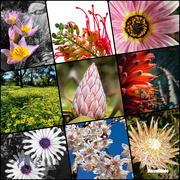 30th Sep 2020 - Blooming Marvellous