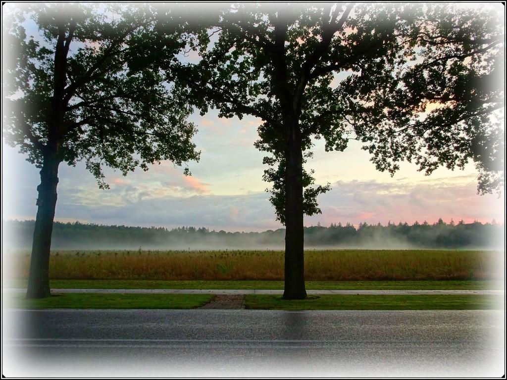 emerging mist by gijsje
