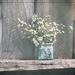 In My Own Little World by lyndemc