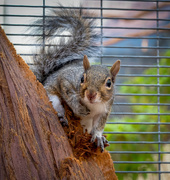 29th Sep 2020 - Squirrel